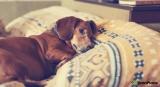Dispositivos inteligentes para mascotas